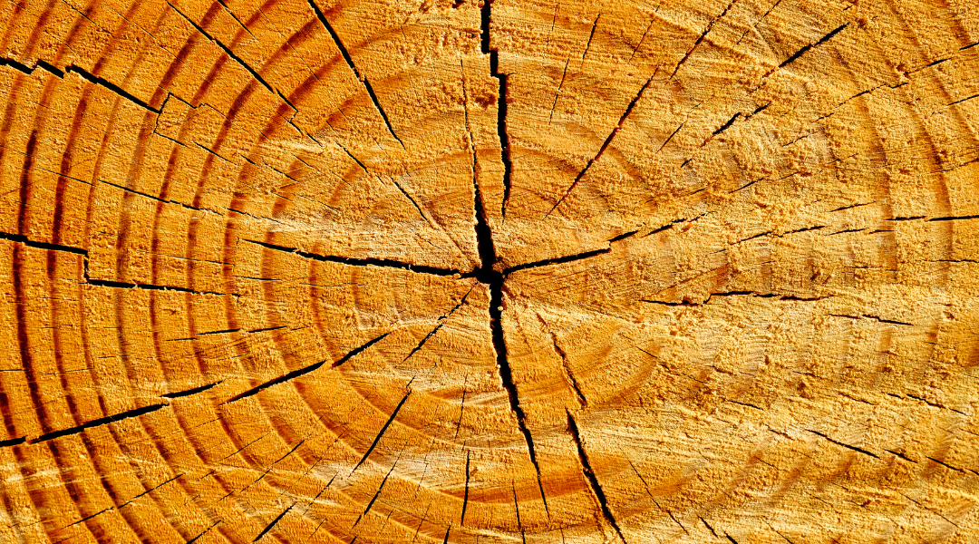 Tree trunk showing growth from the inside out